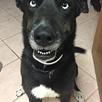 Adopt A Pet :: Luna - Del Rio, TX