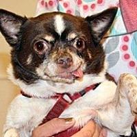 Adopt A Pet :: Chico - Wildomar, CA
