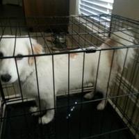 Adopt A Pet :: Dallas (Frisco) - Seagoville, TX