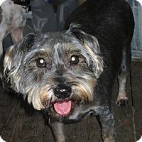 Adopt A Pet :: MITZI - Williston Park, NY