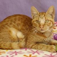 Adopt A Pet :: Curly - Bristol, IN