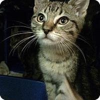 Adopt A Pet :: Crystal - East Brunswick, NJ