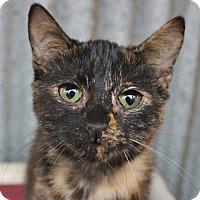 Adopt A Pet :: Teeny Tina - Atlanta, GA
