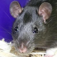 Adopt A Pet :: Jade - Jefferson, WI