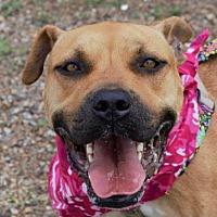 Adopt A Pet :: Princess - Abbeville, LA