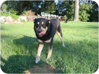 Shepherd (Unknown Type) Mix Dog for adoption in Marion, Indiana - FRED