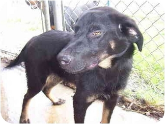 Labrador Retriever/Retriever (Unknown Type) Mix Dog for adoption in Cadiz, Ohio - Lab Mix - Webbed Feet