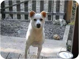 Shar Pei Mix Dog for adoption in Salem, Oregon - Alexis