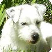 Adopt A Pet :: Trevor - Rhinebeck, NY