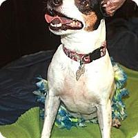 Adopt A Pet :: BELLE - Brooksville, FL