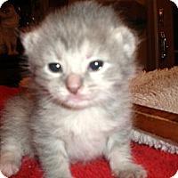 Adopt A Pet :: Savannah - Xenia, OH