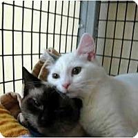 Adopt A Pet :: Wok & Cherry Blossom - Deerfield Beach, FL