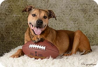 Shepherd (Unknown Type) Mix Dog for adoption in Las Vegas, Nevada - Football