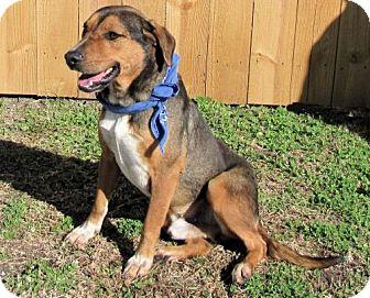 Beagle/Terrier (Unknown Type, Medium) Mix Dog for adoption in Port St. Joe, Florida - Rowdy-DAWGS