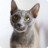 Adopt A Pet :: Jack - Xenia, OH