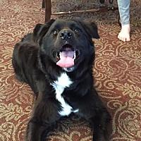 Adopt A Pet :: Luke (courtesy post)(NC) - Seymour, CT