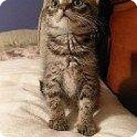 Adopt A Pet :: CLOVER - Hampton, VA