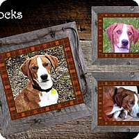 Adopt A Pet :: Socks ADOPTED - Ontario, ON