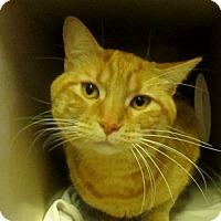 Adopt A Pet :: Ashton - Lloydminster, AB