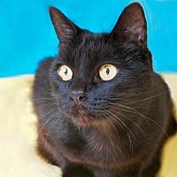 Adopt A Pet :: Domenica - Coronado, CA
