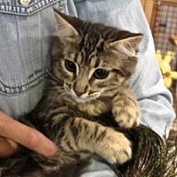Adopt A Pet :: Kaylee - Davis, CA