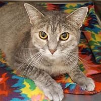 Adopt A Pet :: Ariel - Lago Vista, TX