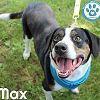 Adopt A Pet :: Max - Kimberton, PA