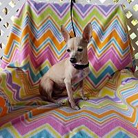 Adopt A Pet :: Leone - Houston, TX