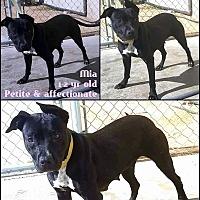 Adopt A Pet :: Mia - Lancaster, CA