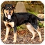 Photo 1 - Rottweiler Dog for adoption in Tracy, California - Mac