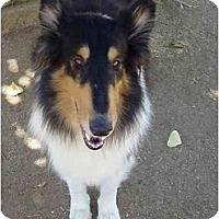 Adopt A Pet :: Blackjack - Gardena, CA