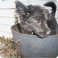 Adopt A Pet :: Nite Lily - Holland, MI