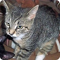 Adopt A Pet :: Muenster - Secaucus, NJ