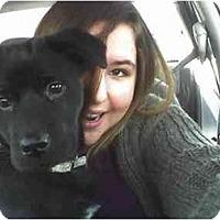 Adopt A Pet :: Lucy, FL - Miami Beach, FL