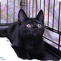 Adopt A Pet :: Timothy - Mission, BC