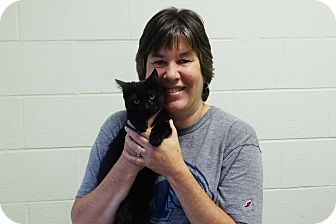 Domestic Shorthair Kitten for adoption in Elyria, Ohio - Spade