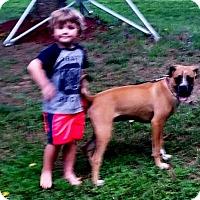 Adopt A Pet :: Britt-Adopted! - Turnersville, NJ