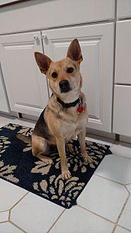 Shepherd (Unknown Type)/Shepherd (Unknown Type) Mix Dog for adoption in LANSING, Michigan - Selma
