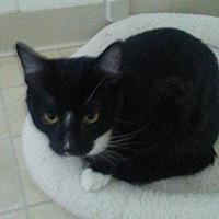 Adopt A Pet :: Howie (Heidi's kid) - Elk Grove, CA