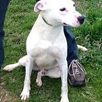Adopt A Pet :: Chance - Orland, CA