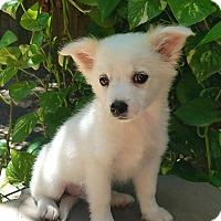 Adopt A Pet :: Allie - conroe, TX
