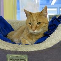 Adopt A Pet :: Charlee - Northbrook, IL