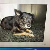 Adopt A Pet :: Tasha - Arlington, WA