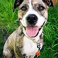 Adopt A Pet :: Wanda, wonderful little beauty - Snohomish, WA