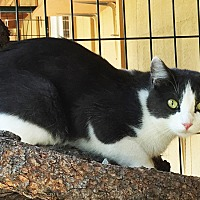 Adopt A Pet :: Princess - Colorado Springs, CO