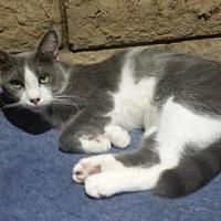 Adopt A Pet :: Vanderwall - Glendale, AZ