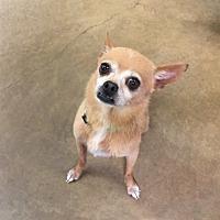 Adopt A Pet :: Rufus - Riverside, CA