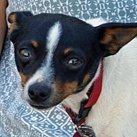 Adopt A Pet :: Calvin and Hobbs - Sprakers, NY