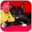 Photo 2 - Domestic Shorthair Cat for adoption in Taylor Mill, Kentucky - Zoe