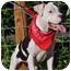 Photo 3 - American Bulldog Mix Puppy for adoption in Aurora, Colorado - Libby